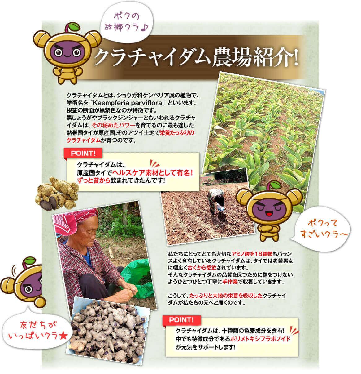 クラチャイダム農業紹介