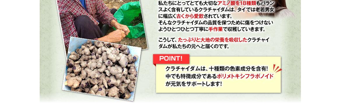 大切なアミノ酸を18種類もバランスよく含有したクラチャイダムを、ひとつずつ丁寧に手作業で収穫していきます